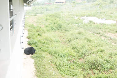 Bear saved from bile farm arrives at sanctuary