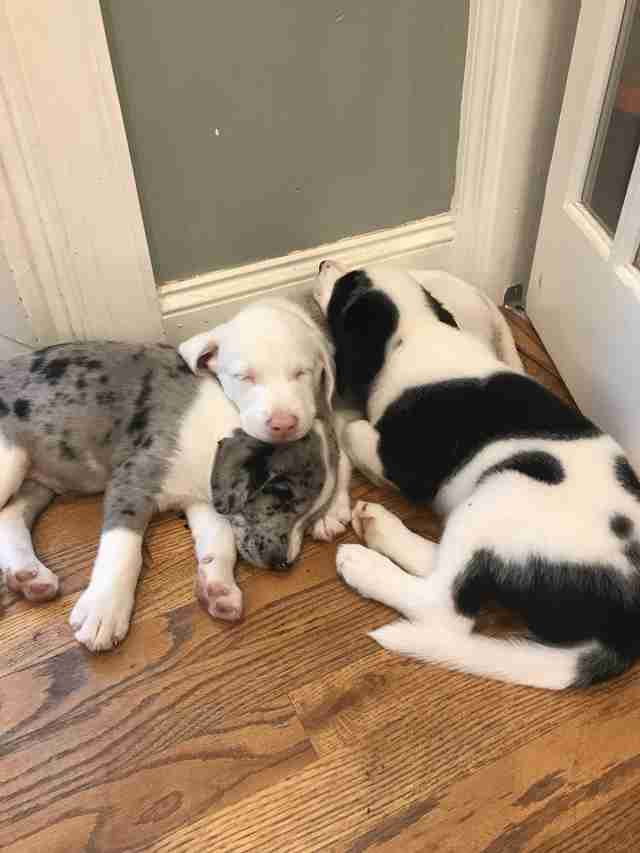 Puppy snuggled up with siblings