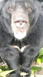 Bear saved from Vietnam bile farm