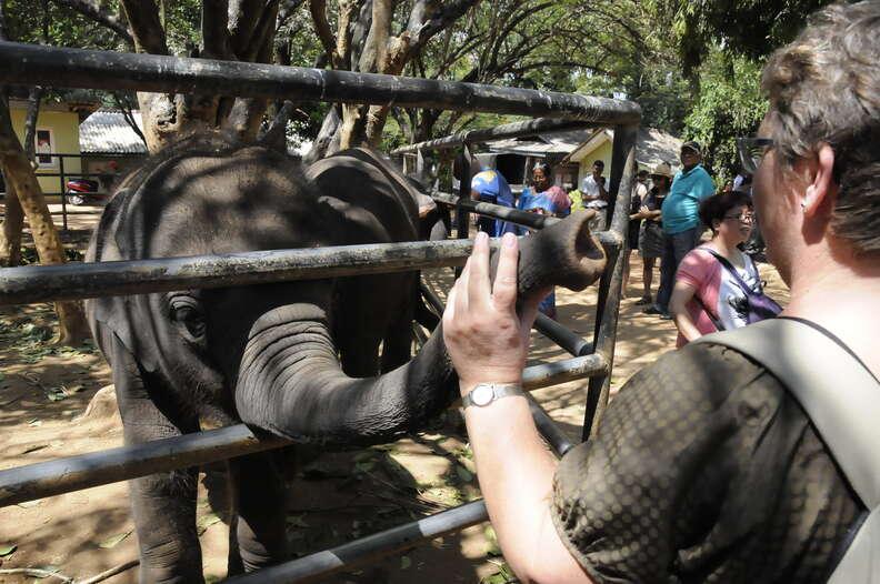 Woman touching elephant's trunk