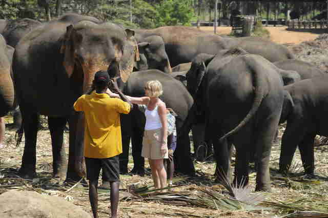 People posing for photos with elephants