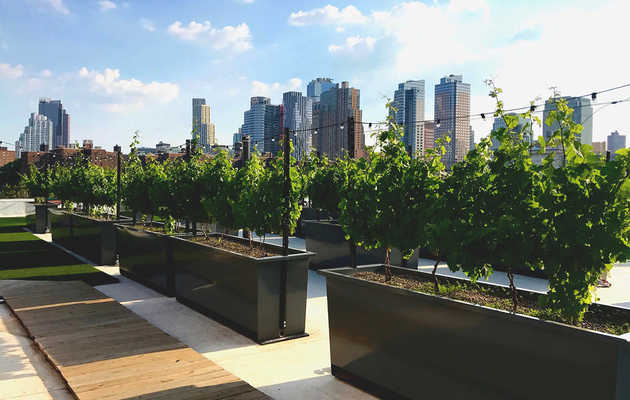 The Urban Wineries Making New York City a Wine Destination