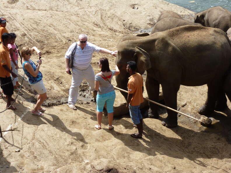 People posing for selfies with elephants