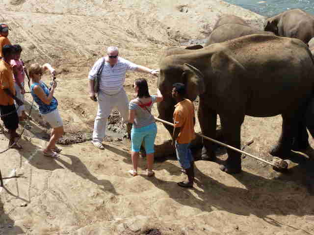 People posing for selfies with elephants