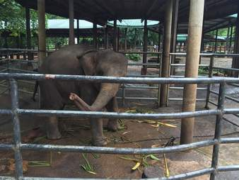 Elephant locked up in cage