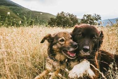 Dog snuggling together in the grass