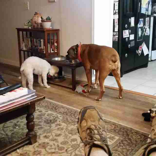 dog mourns sister