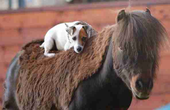 rescue dog and horse