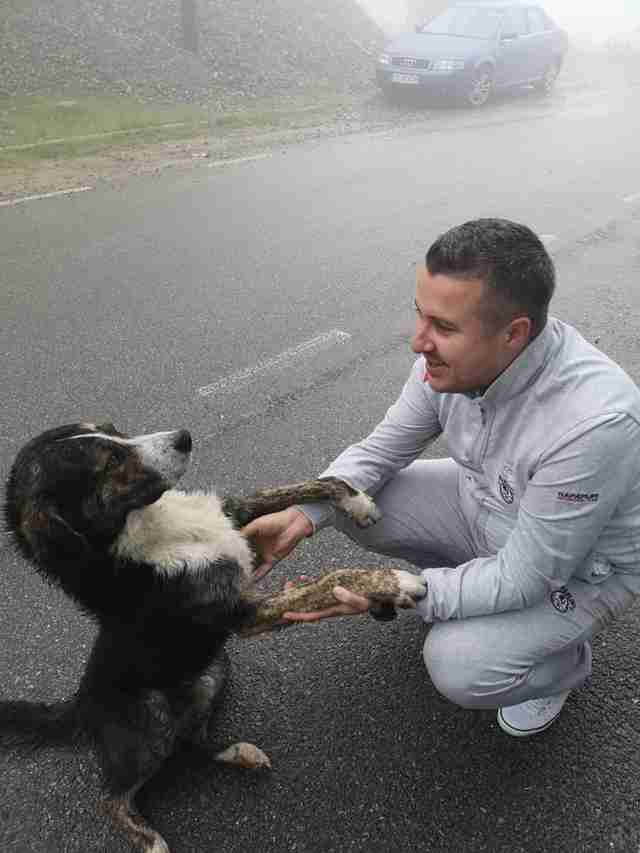 Stray Dog Saves Injured Cyclist Stranded In The Mountains