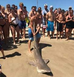 shark endangerment beach photos