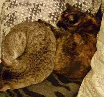 Cats snuggling together on bed