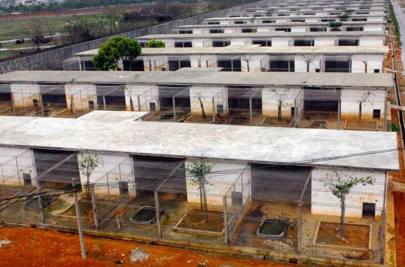 tiger farm enclosure