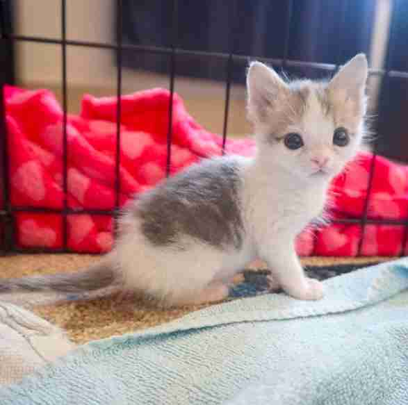 tiny kitten ate dirt to survive