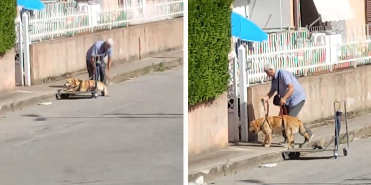This Touching Video Of A Man And His Dog Is Making People's Hearts Soar