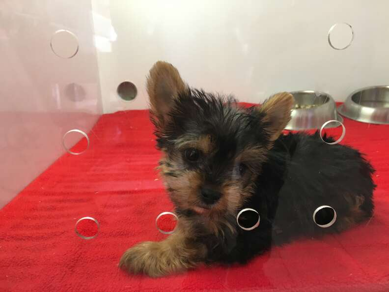 Dog in kennel at pet store
