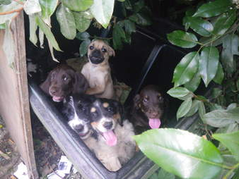 puppies abandoned in a bush