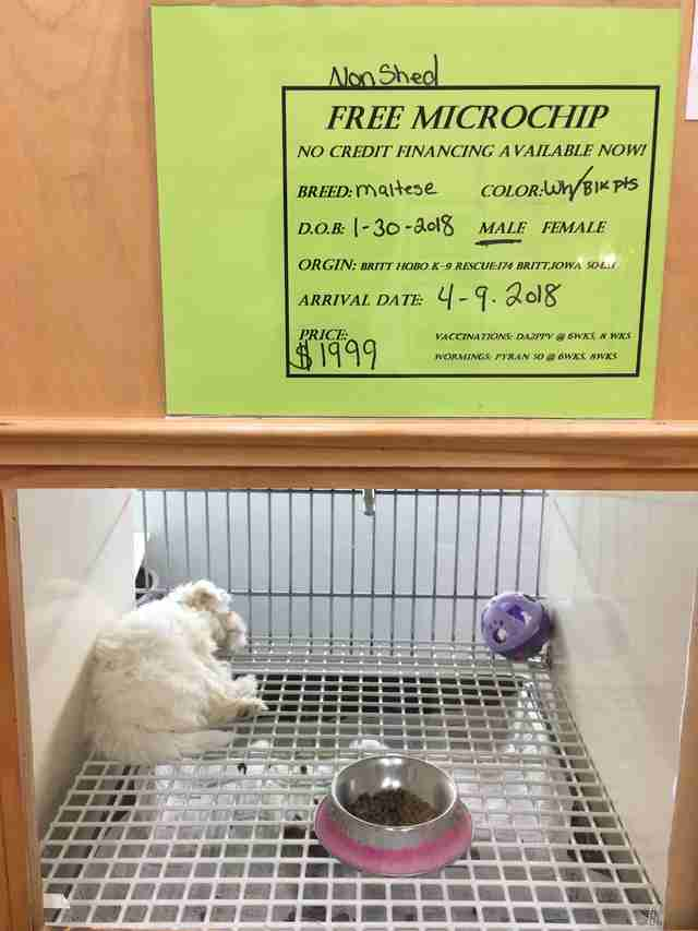 Dog being sold at pet store