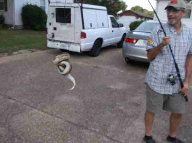 python rescue virginia beach