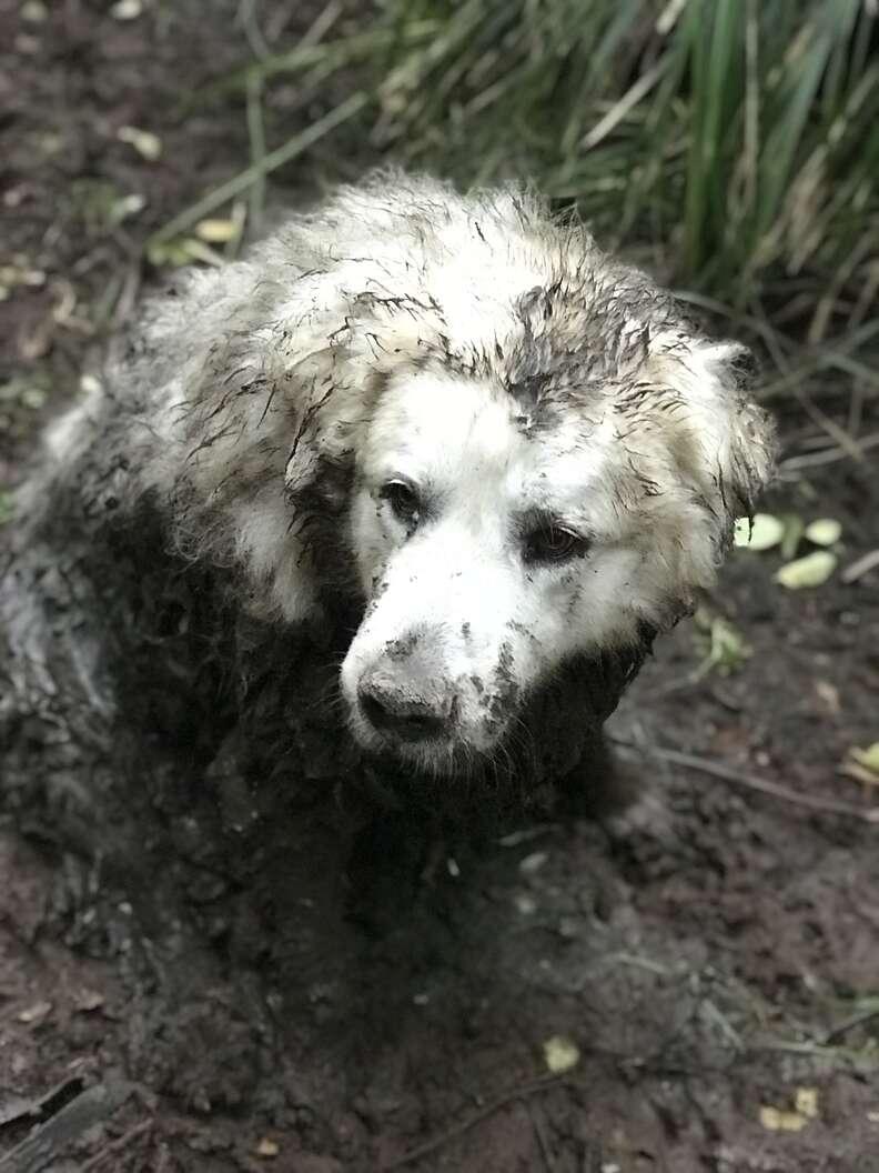 Dog stuck in muddy swamp