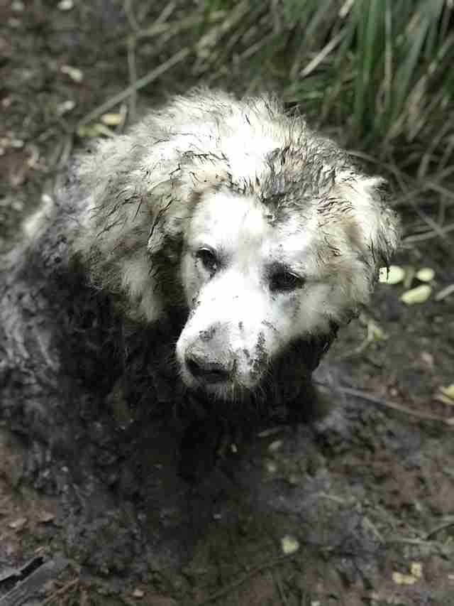 Dog stuck in muddy swamp