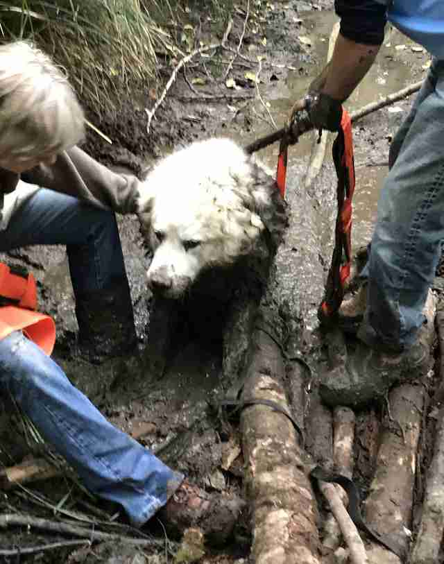 People save dog from mud pit