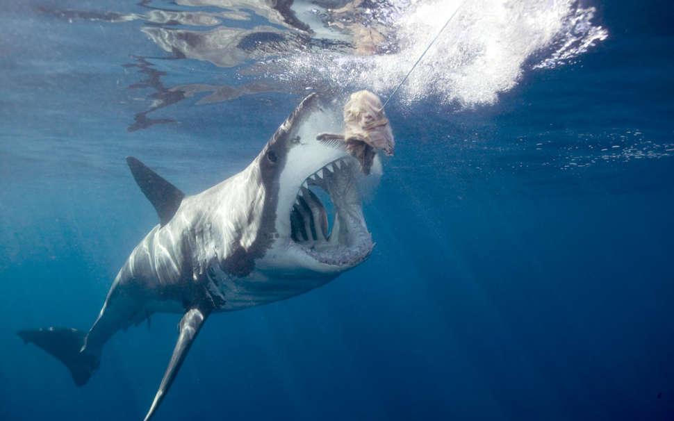Shark Week 2018: How Freediver Mike Dornellas Survived The