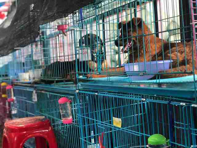 dog meat rescue china