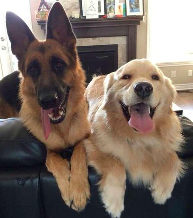Ryker and her best friend bailey, a golden retriever