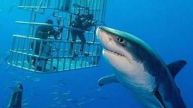 shark deep blue