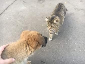 man adopts stray dog and cat