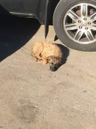 man adopts stray cat and dog