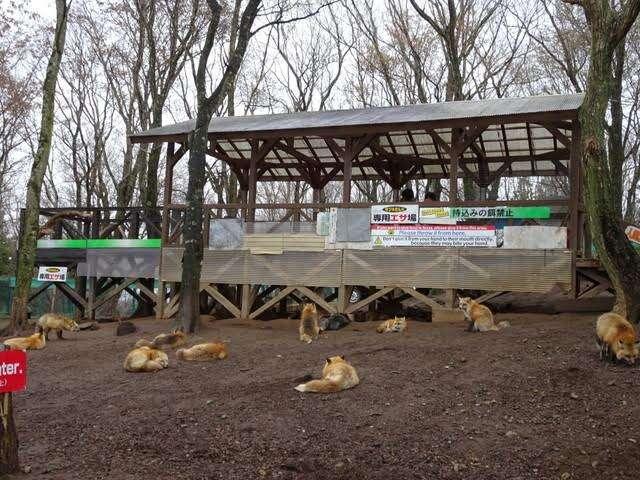 The feeding area at Fox Village