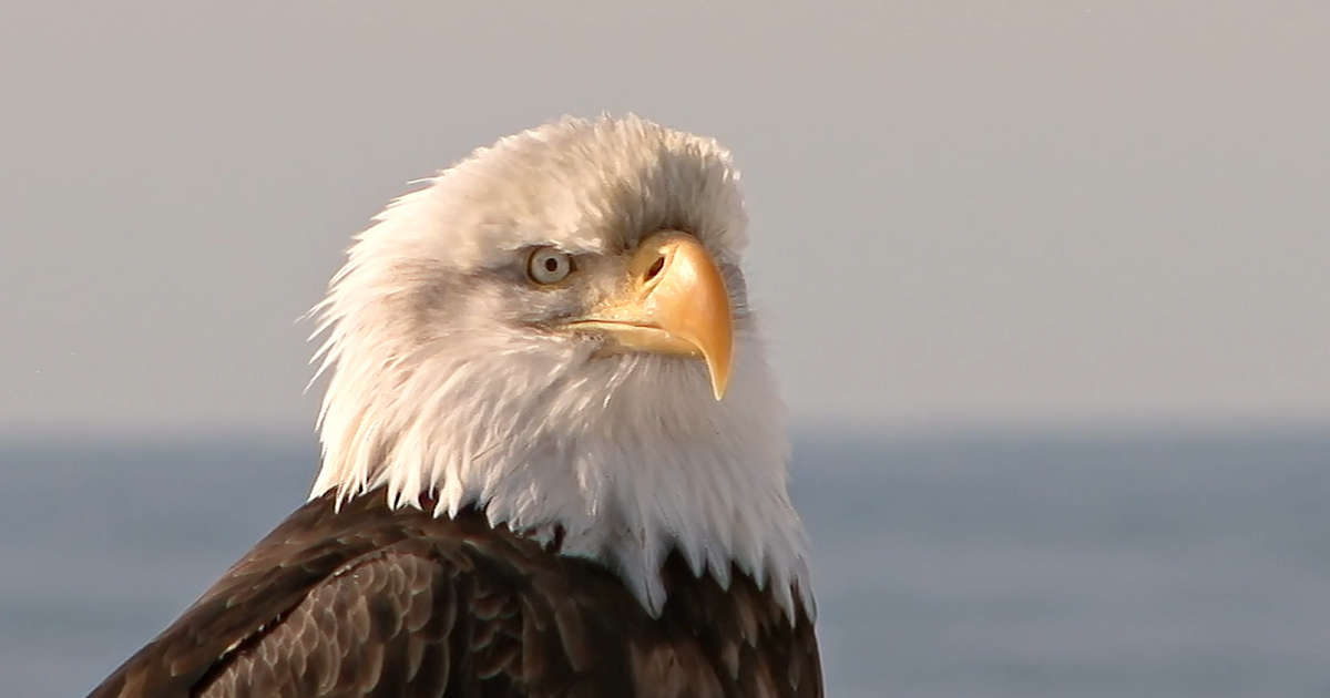 Trump Administration Proposes Changes To Endangered Species Act