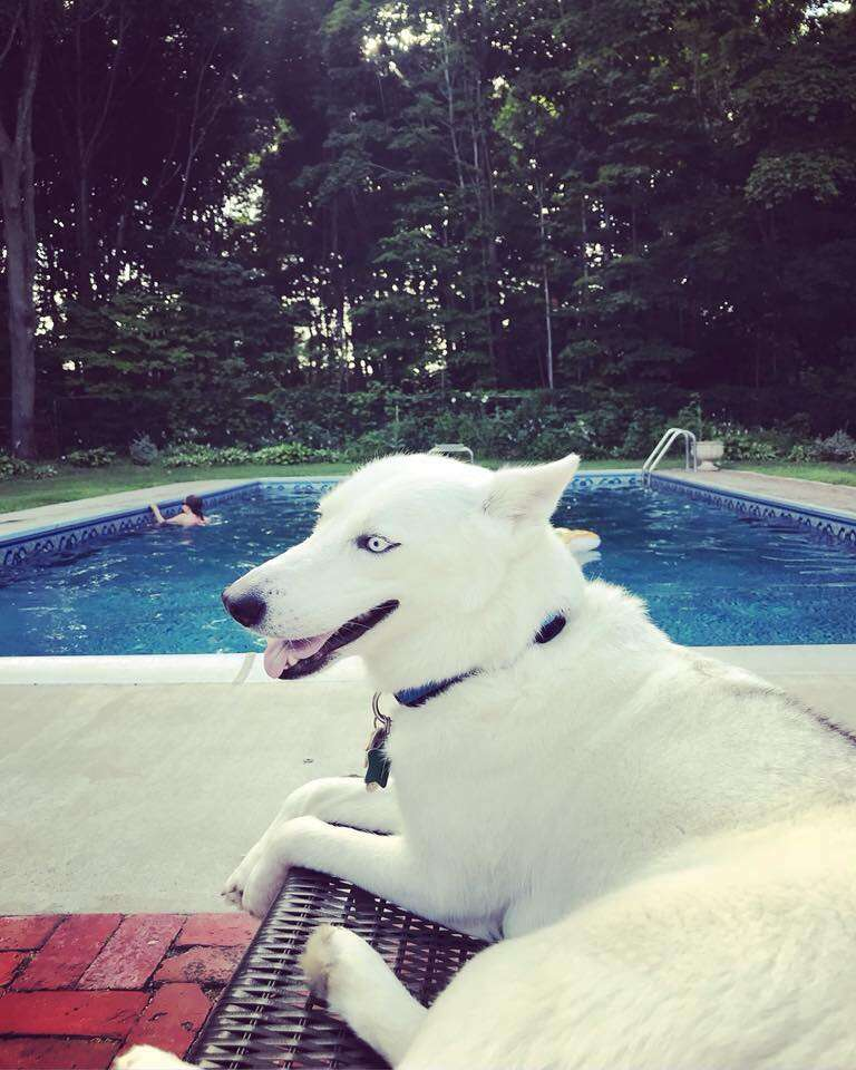 Husky mix smiling on deck chair