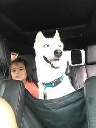 Dog smiling inside car