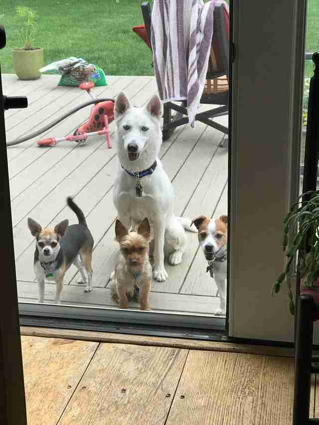 Dogs standing outside the door