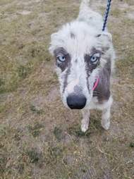 Sick looking dog with mange