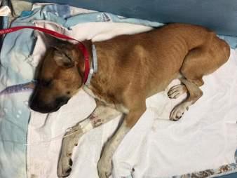 Dog lying on blanket at vet