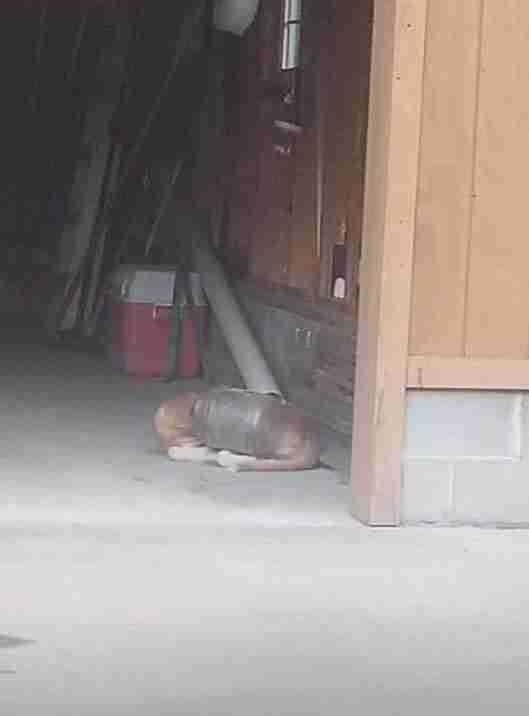 Dog lying on floor of garage