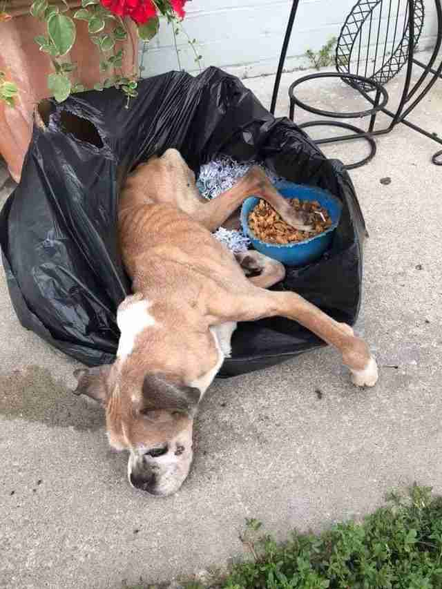 dog rescue boxer trash bag