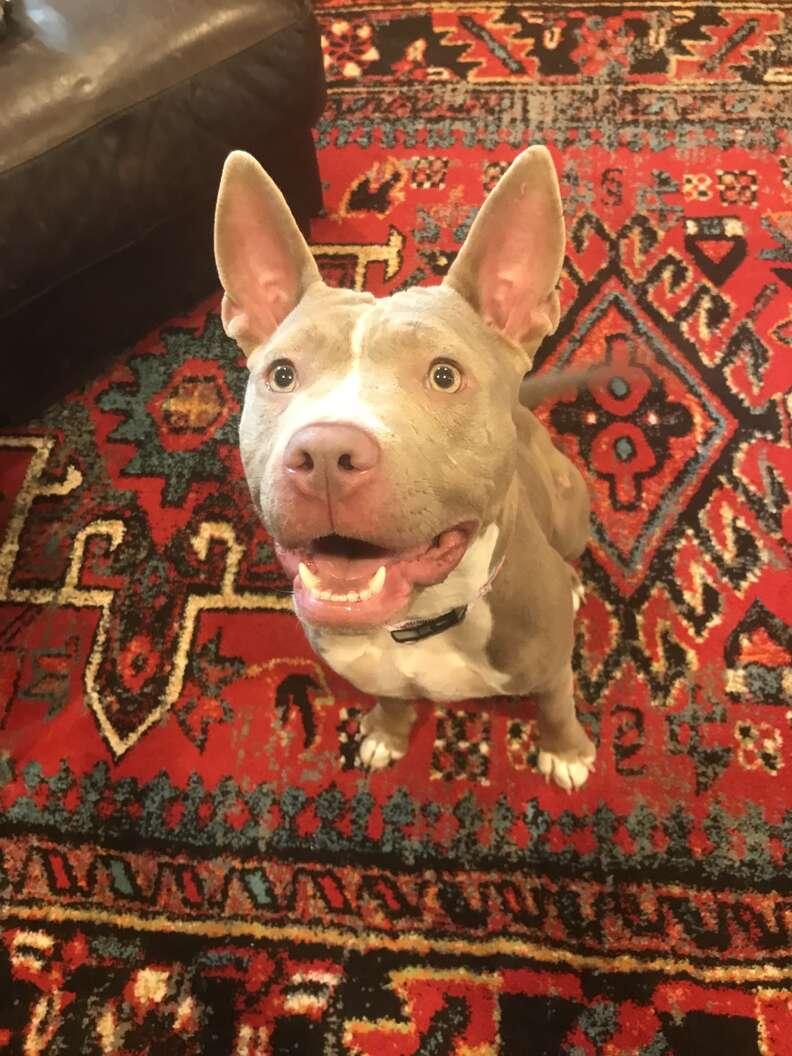 Dog standing on carpet