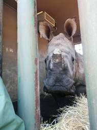 orphan rhino south africa