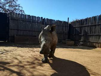rhino orphan rescue south africa