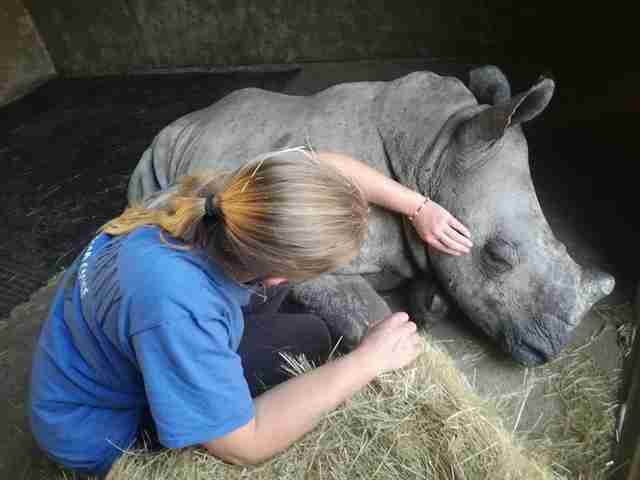 orphaned rhino rescue south africa