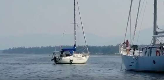 Sailboats in the water in British Columbia