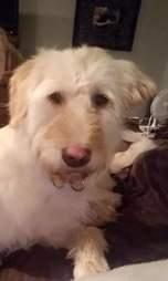 Closeup of little white dog