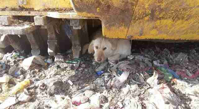 Dog living in garbage dump