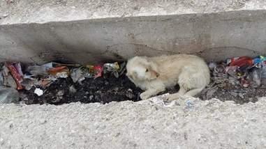 Dog hiding in landfill