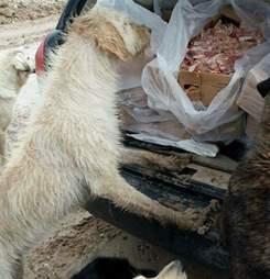 Stray dog looking at boxes of food