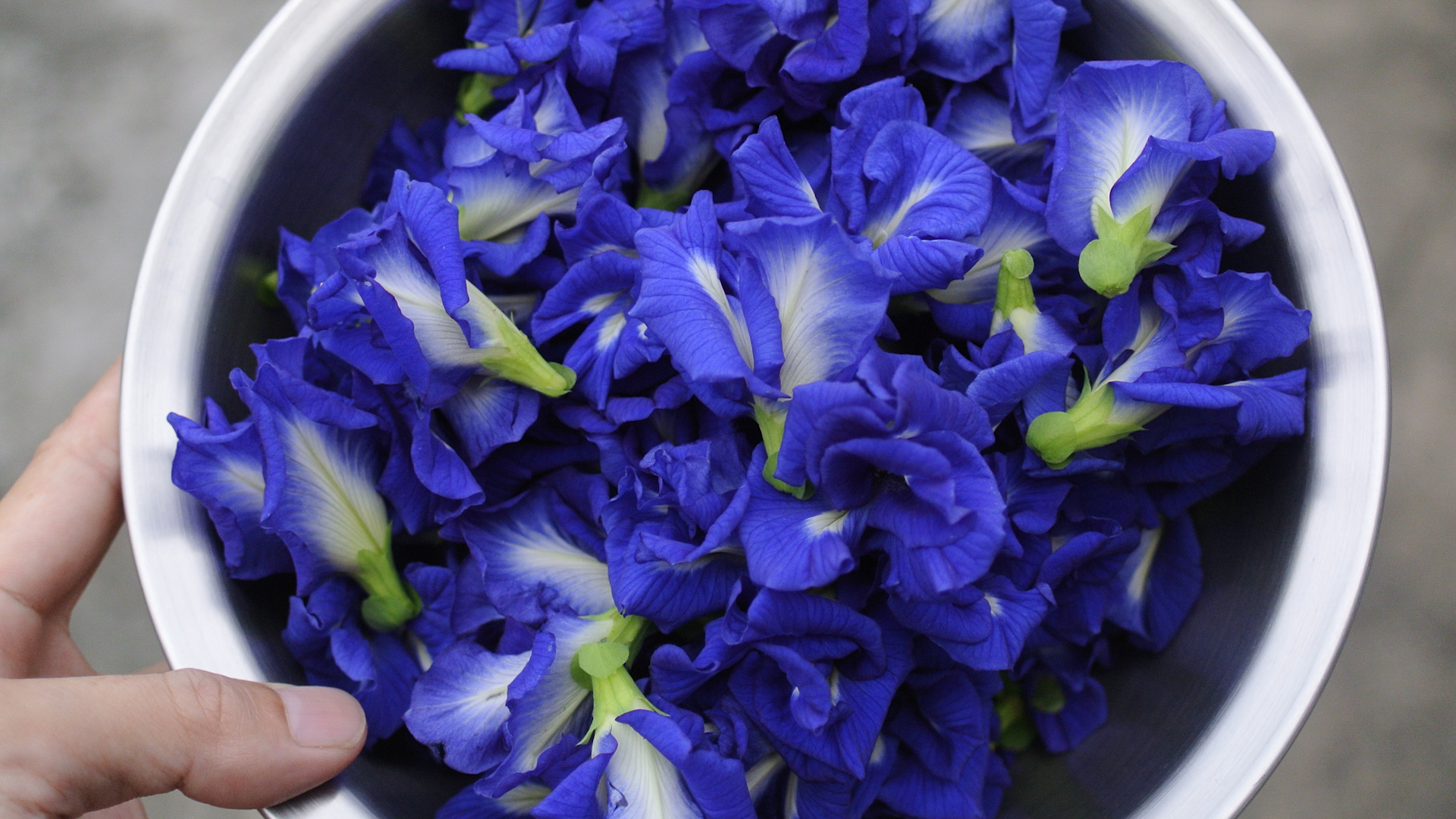 This flower changes the color of food naturally nowthis izmirmasajfo